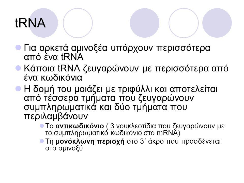 tRNA Για αρκετά αμινοξέα υπάρχουν περισσότερα από ένα tRNA