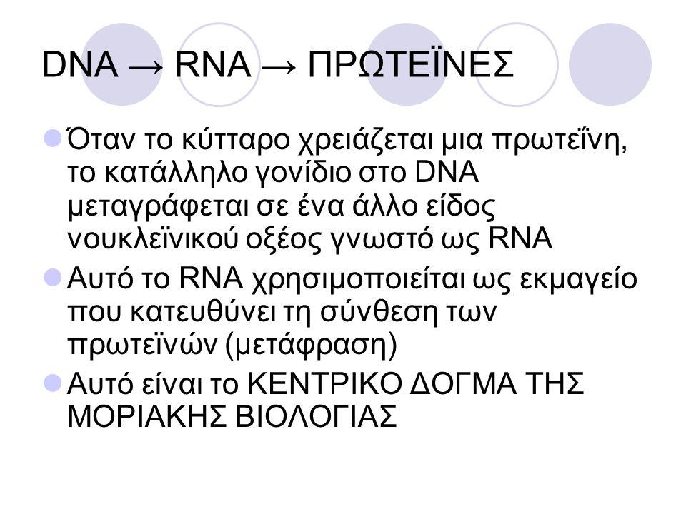 DNA → RNA → ΠΡΩΤΕÏΝΕΣ