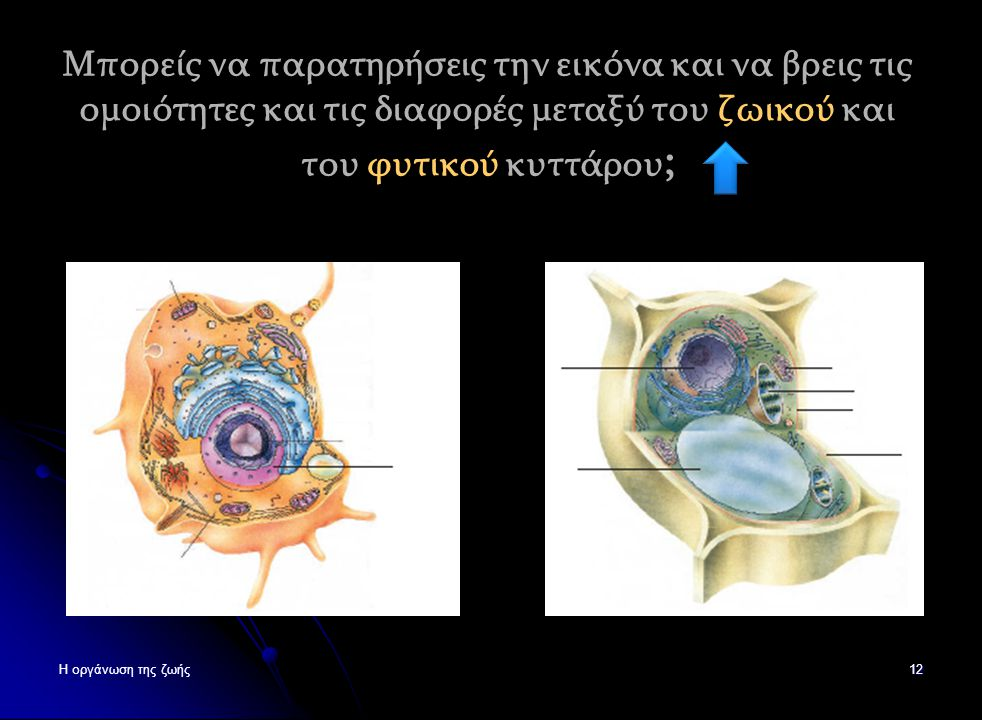Μπορείς να παρατηρήσεις την εικόνα και να βρεις τις ομοιότητες και τις διαφορές μεταξύ του ζωικού και του φυτικού κυττάρου;