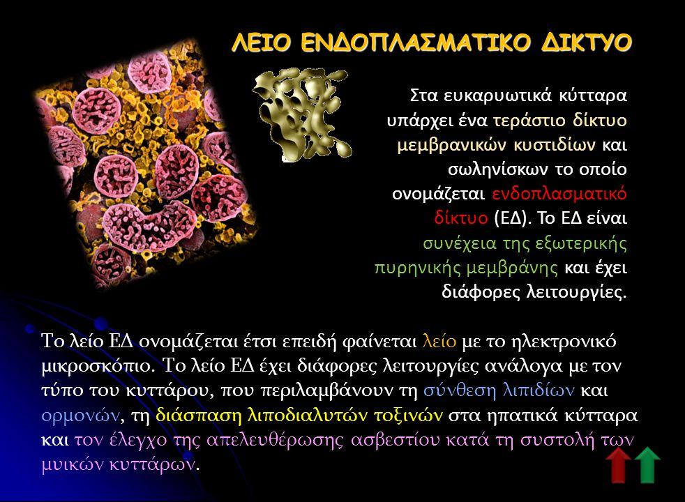 ΛΕΙΟ ΕΝΔΟΠΛΑΣΜΑΤΙΚΟ ΔΙΚΤΥΟ