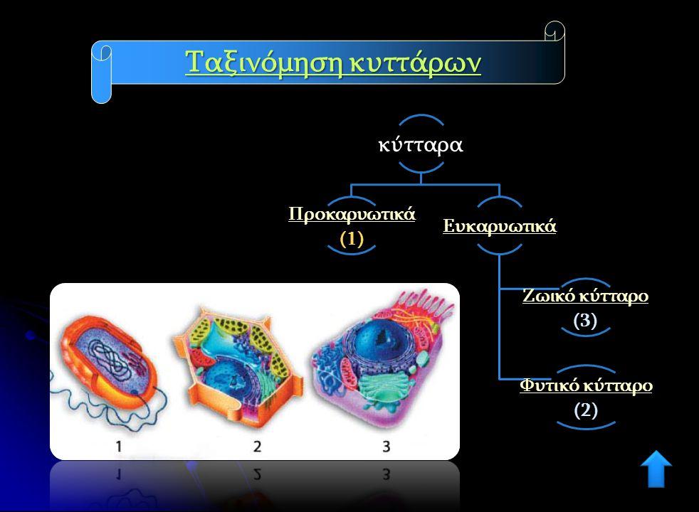 Ταξινόμηση κυττάρων κύτταρα Προκαρυωτικά (1) Ευκαρυωτικά Ζωικό κύτταρο