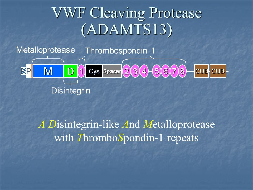 VWF Cleaving Protease (ADAMTS13)