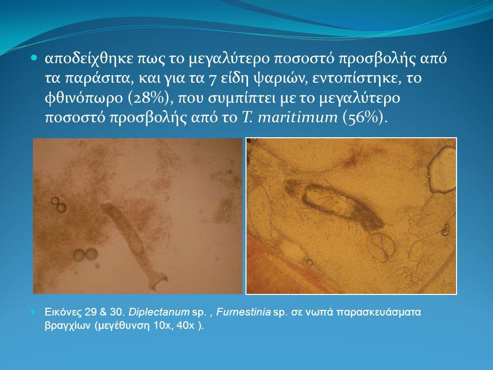 αποδείχθηκε πως το μεγαλύτερο ποσοστό προσβολής από τα παράσιτα, και για τα 7 είδη ψαριών, εντοπίστηκε, το φθινόπωρο (28%), που συμπίπτει με το μεγαλύτερο ποσοστό προσβολής από το T. maritimum (56%).