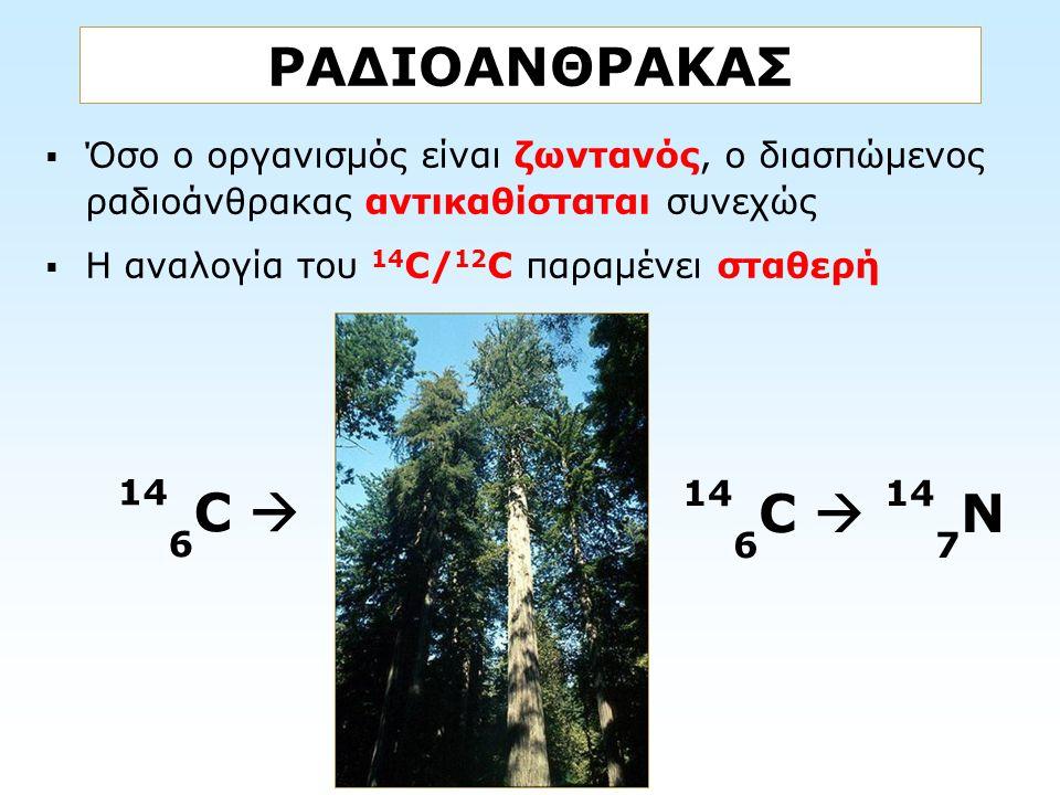 ΡΑΔΙΟΑΝΘΡΑΚΑΣ Όσο ο οργανισμός είναι ζωντανός, ο διασπώμενος ραδιοάνθρακας αντικαθίσταται συνεχώς. Η αναλογία του 14C/12C παραμένει σταθερή.