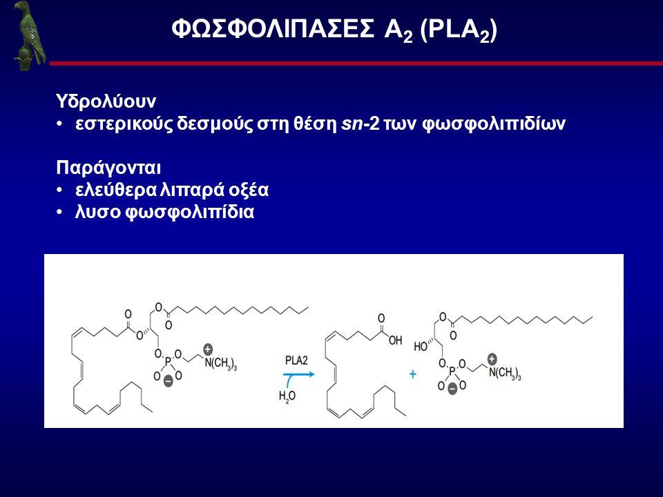 ΦΩΣΦΟΛΙΠΑΣΕΣ Α2 (PLA2) Υδρολύουν