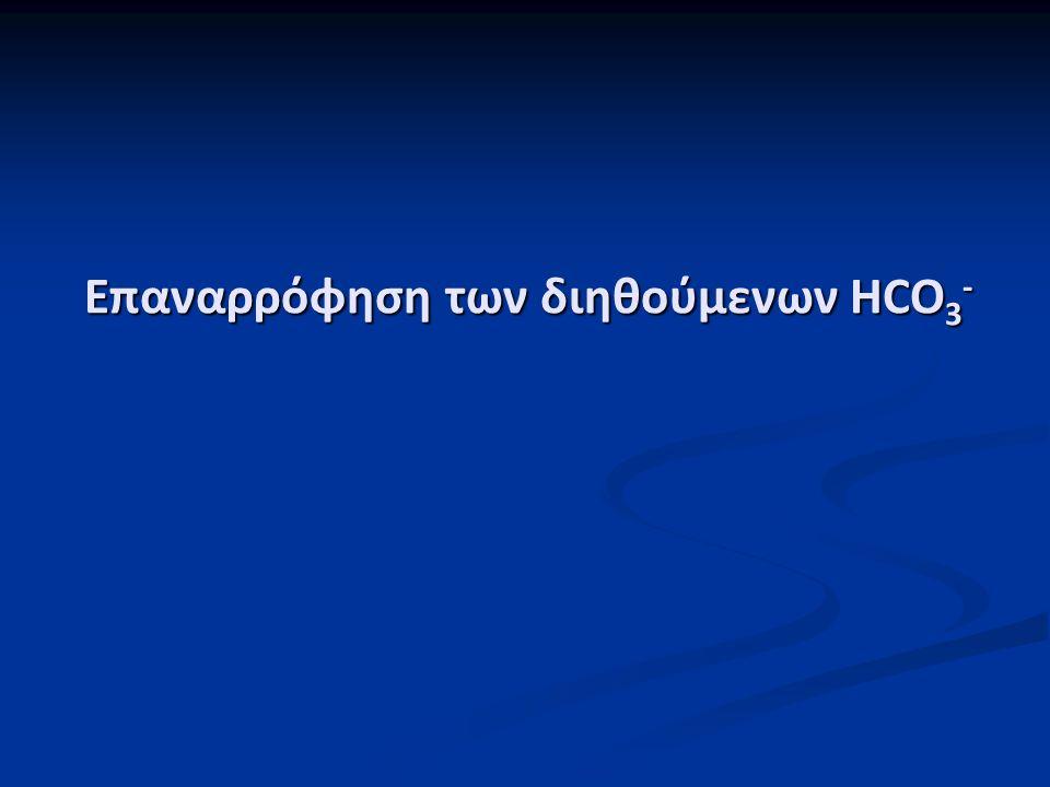 Επαναρρόφηση των διηθούμενων HCO3-
