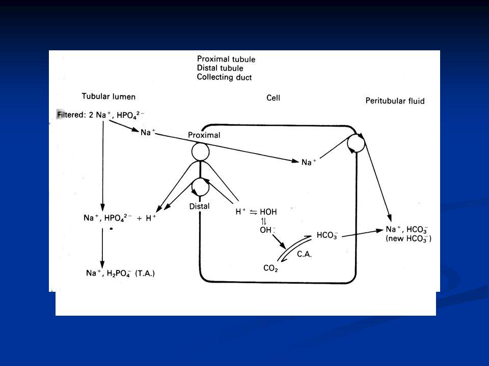Εικόνα 9. Μηχανισμοί παραγωγής Τ.Α. και σχηματισμού «νέων» HCO-3