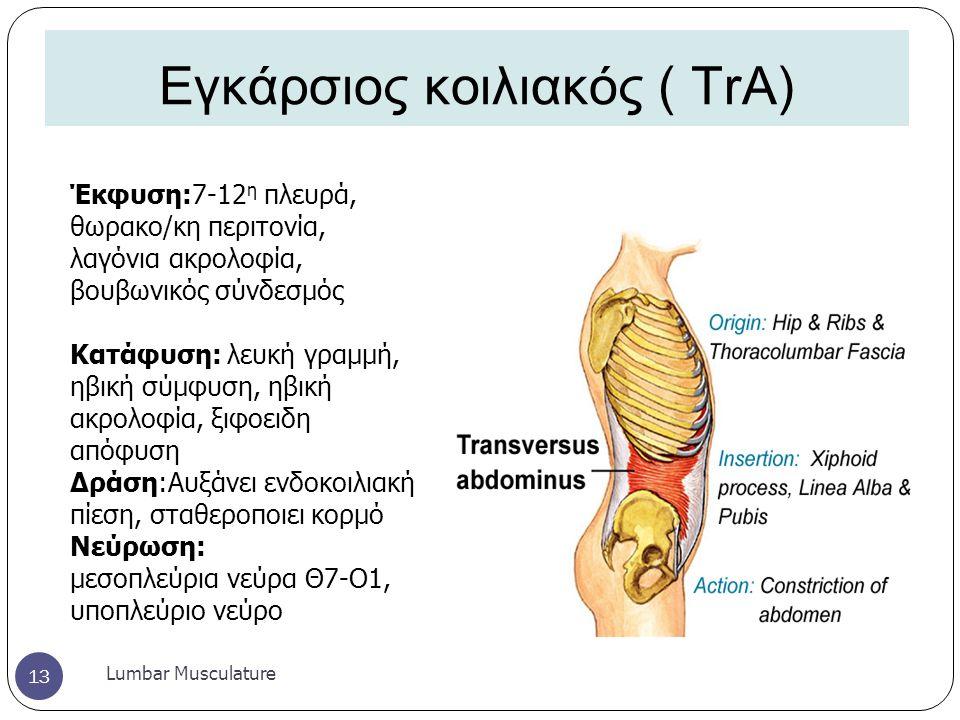 Εγκάρσιος κοιλιακός ( TrA)
