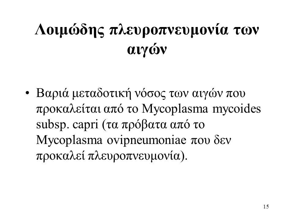 Λοιμώδης πλευροπνευμονία των αιγών