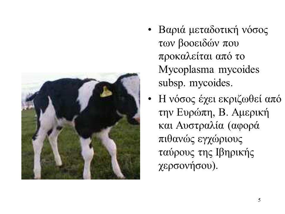 Βαριά μεταδοτική νόσος των βοοειδών που προκαλείται από το Mycoplasma mycoides subsp. mycoides.