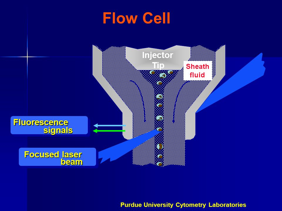 Flow Cell Injector Tip Fluorescence signals Focused laser beam Sheath