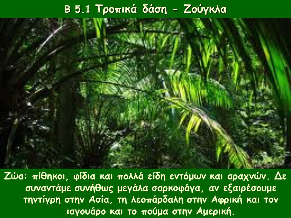 Β 5.1 Τροπικά δάση - Ζούγκλα