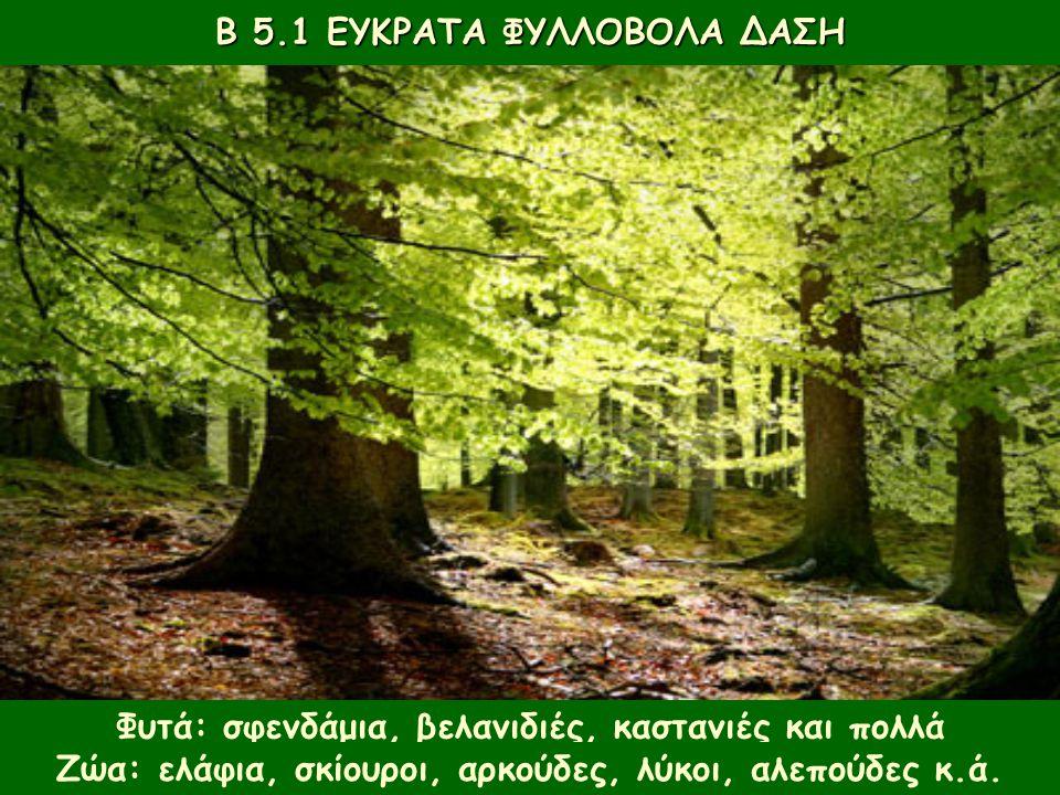 Β 5.1 ΕΥΚΡΑΤΑ ΦΥΛΛΟΒΟΛΑ ΔΑΣΗ