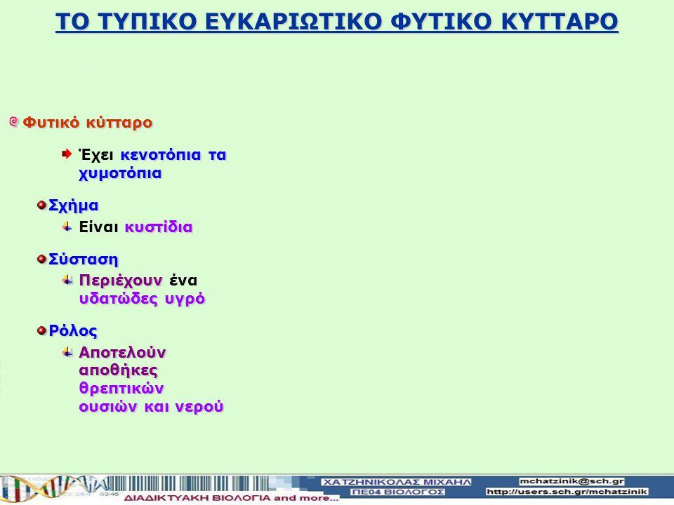 ΤΟ ΤΥΠΙΚΟ ΕΥΚΑΡΙΩΤΙΚΟ ΦΥΤΙΚΟ ΚΥΤΤΑΡΟ