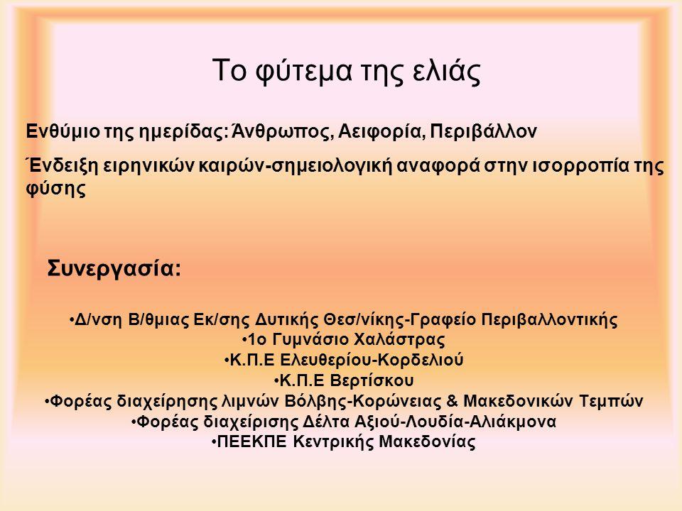 Το φύτεμα της ελιάς Συνεργασία: