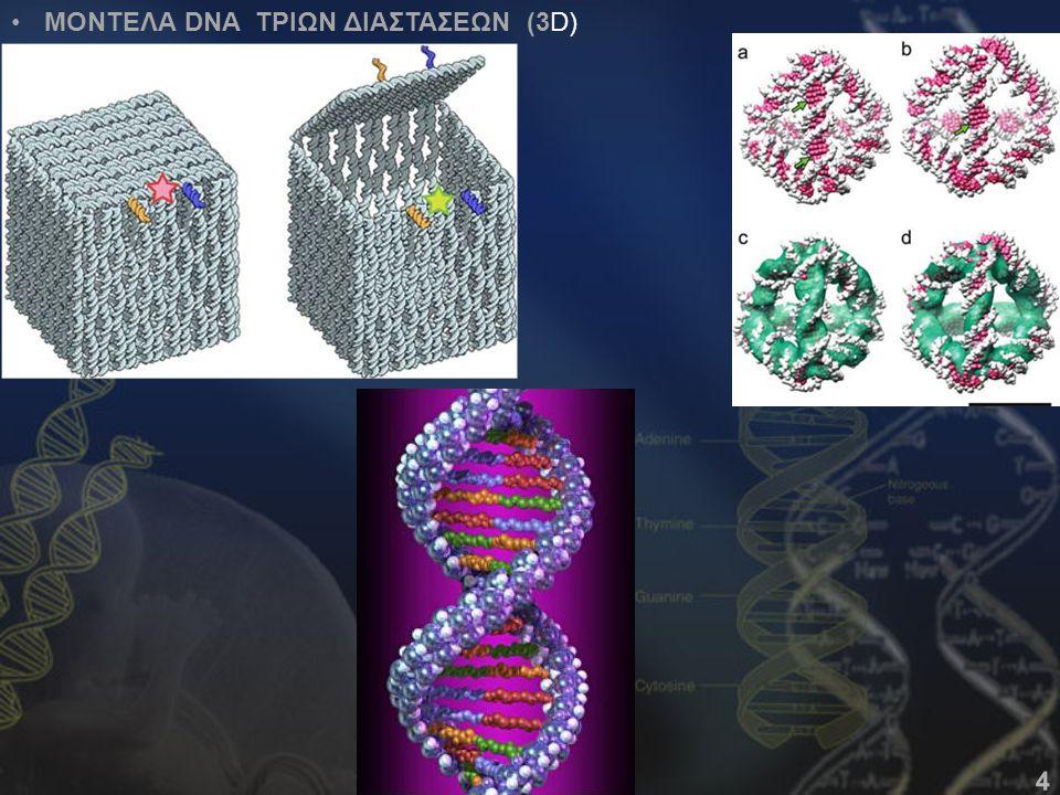 ΜΟΝΤΕΛΑ DNA ΤΡΙΩΝ ΔΙΑΣΤΑΣΕΩΝ (3D)