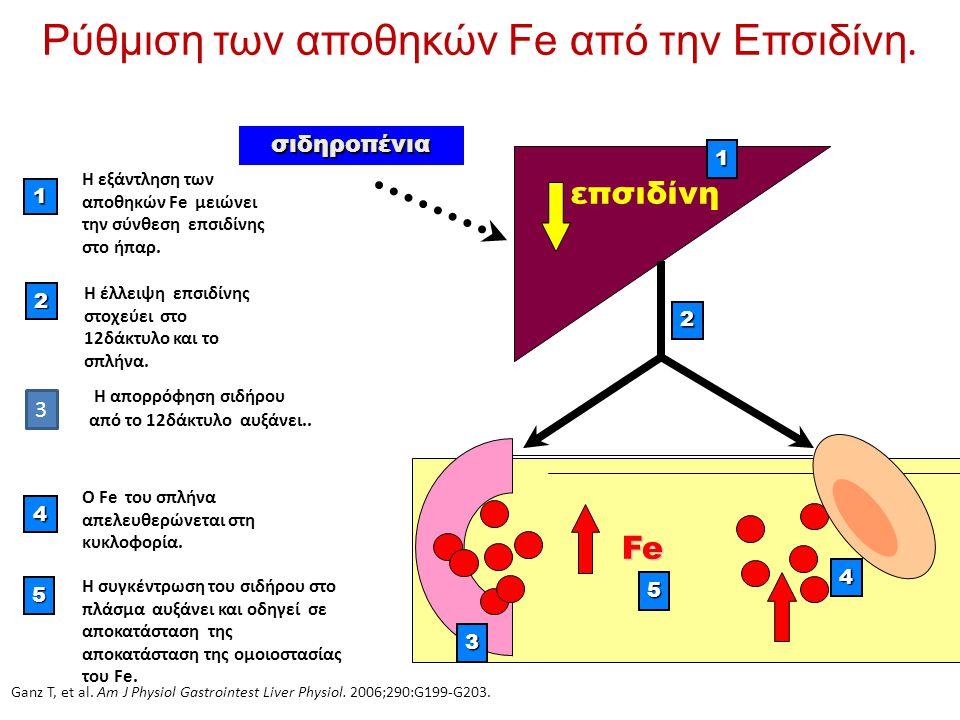Ρύθμιση των αποθηκών Fe από την Επσιδίνη.