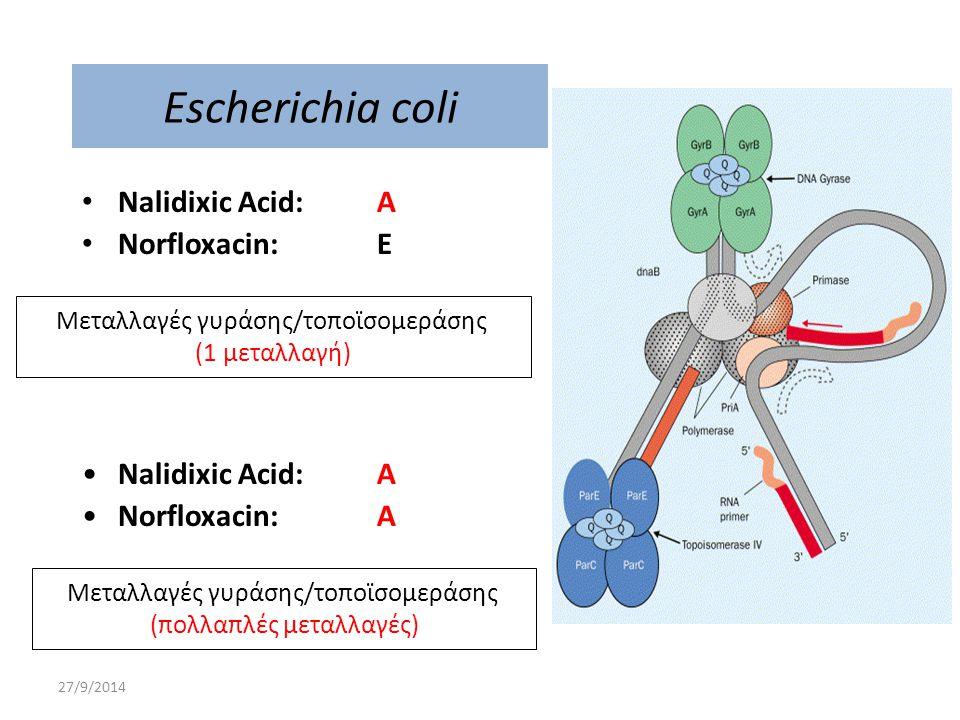 Escherichia coli Nalidixic Acid: A Norfloxacin: E Nalidixic Acid: A