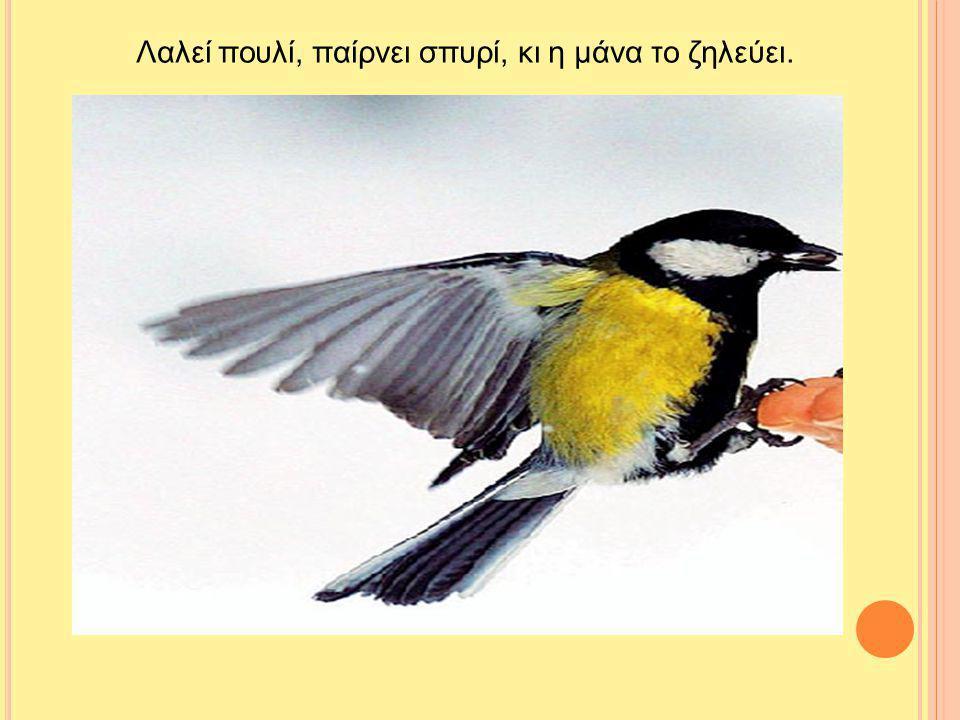 Λαλεί πουλί, παίρνει σπυρί, κι η μάνα το ζηλεύει.
