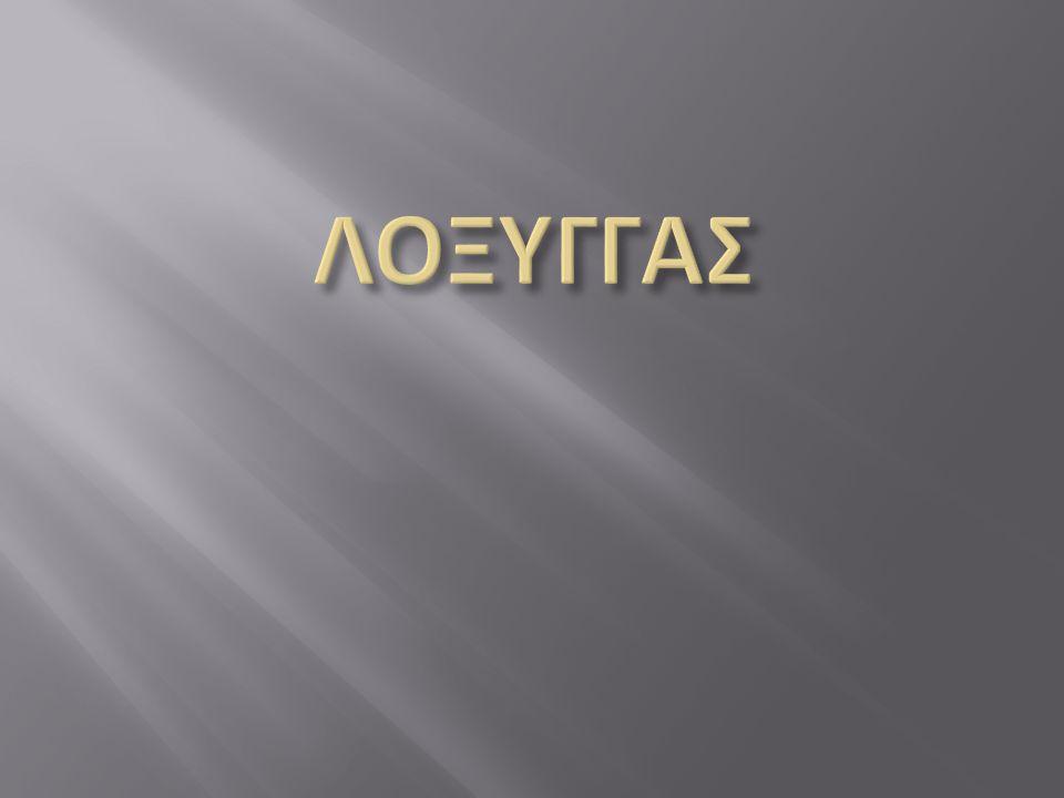 ΛΟΞΥΓΓΑΣ