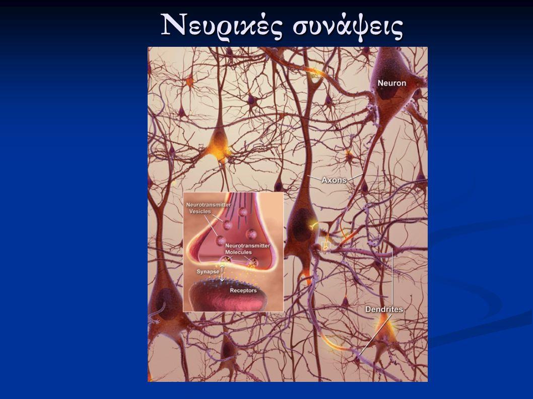 Νευρικές συνάψεις