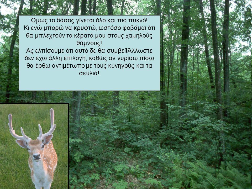 Όμως το δάσος γίνεται όλο και πιο πυκνό!
