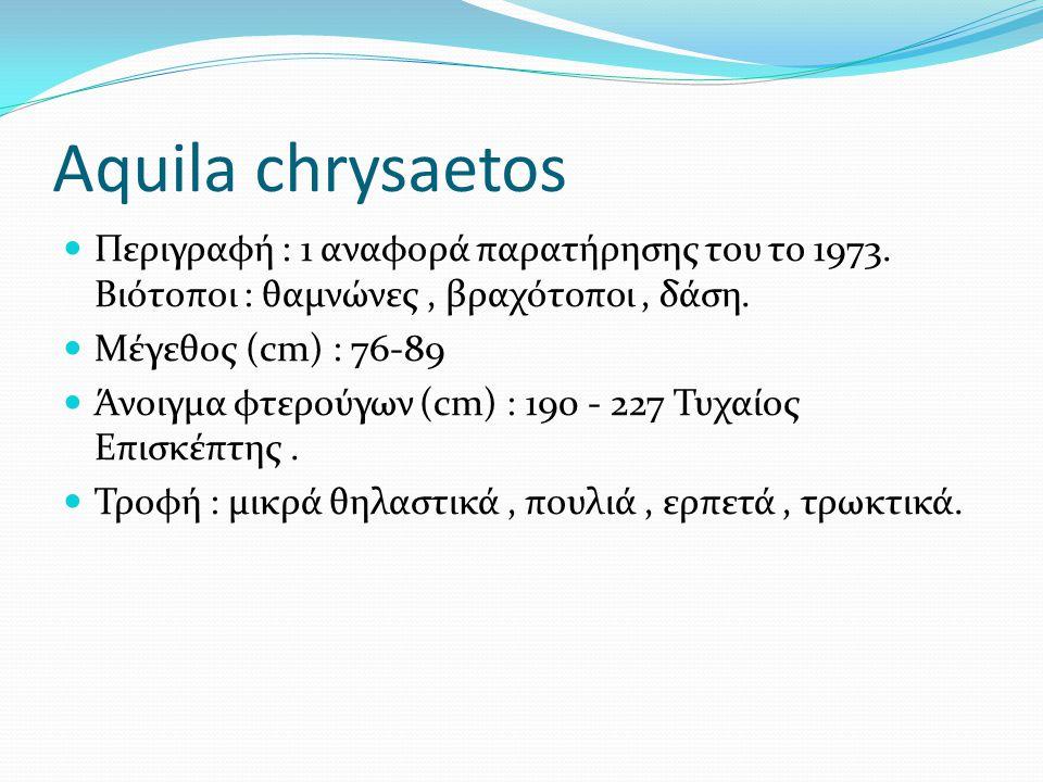Aquila chrysaetos Περιγραφή : 1 αναφορά παρατήρησης του το 1973. Βιότοποι : θαμνώνες , βραχότοποι , δάση.