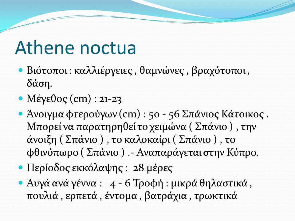 Athene noctua Βιότοποι : καλλιέργειες , θαμνώνες , βραχότοποι , δάση.