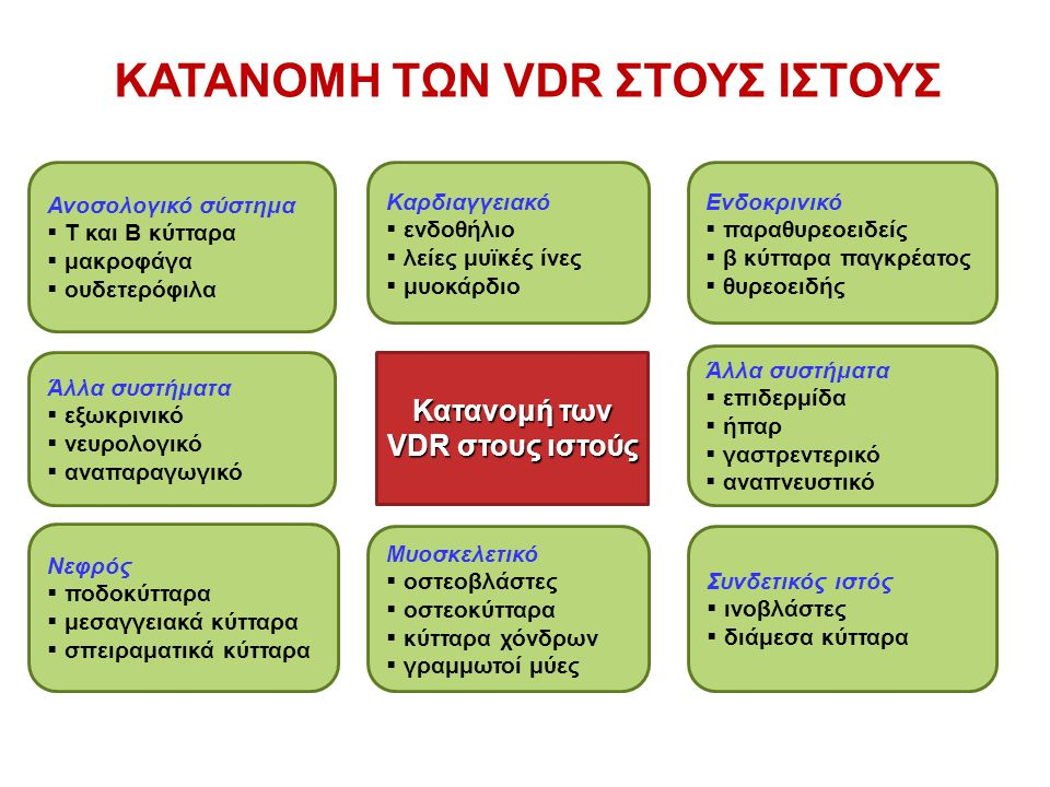 Κατανομή των VDR στους ιστούς