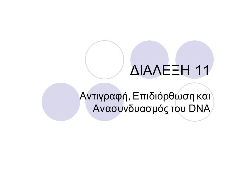 Αντιγραφή, Επιδιόρθωση και Ανασυνδυασμός του DNA