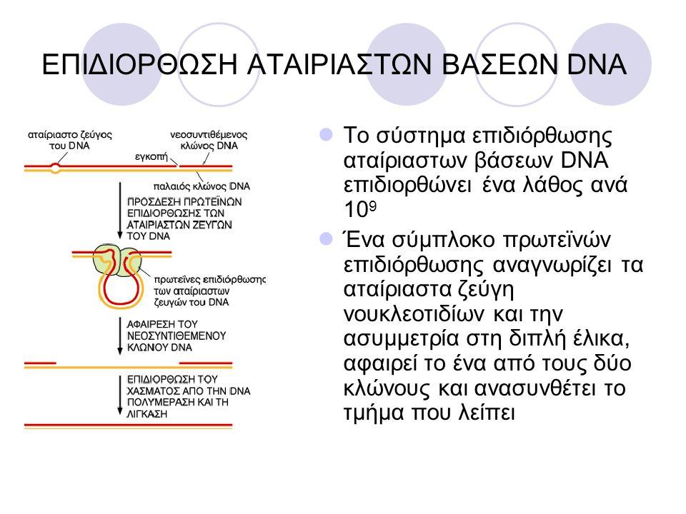 ΕΠΙΔΙΟΡΘΩΣΗ ΑΤΑΙΡΙΑΣΤΩΝ ΒΑΣΕΩΝ DNA