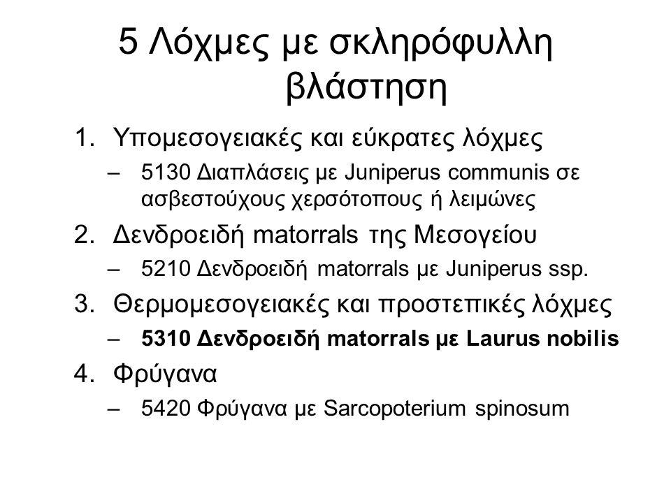 5 Λόχμες με σκληρόφυλλη βλάστηση