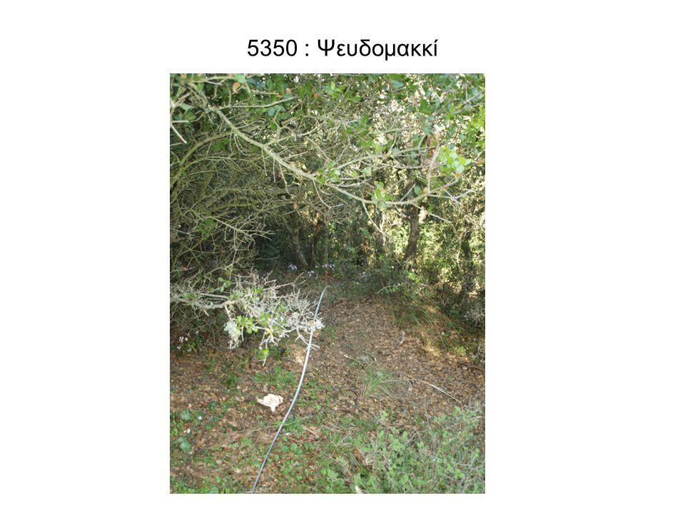 5350 : Ψευδομακκί