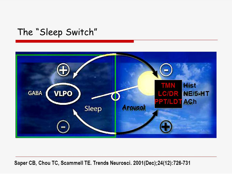 + The Sleep Switch TMN LC/DR PPT/LDT Hist NE/5-HT ACh Arousal