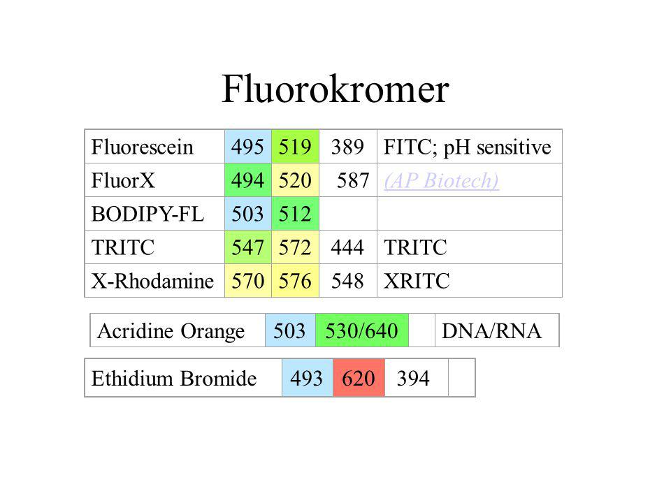 Fluorokromer Fluorescein 495 519 389 FITC; pH sensitive FluorX 494 520