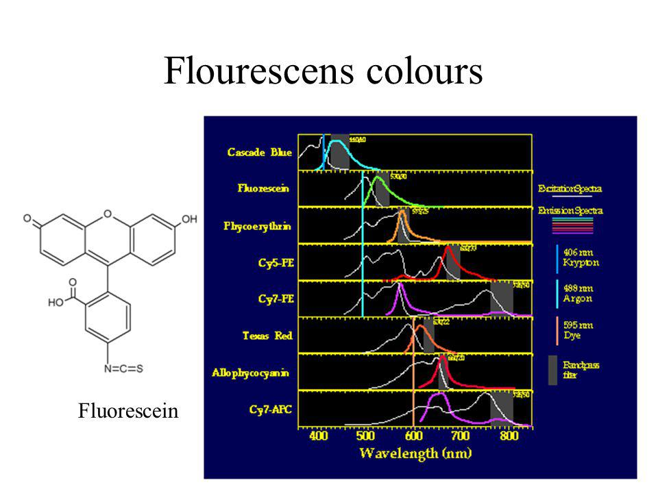 Flourescens colours Fluorescein