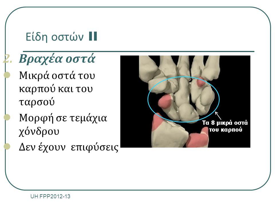 Είδη οστών II Βραχέα οστά Μικρά οστά του καρπού και του ταρσού