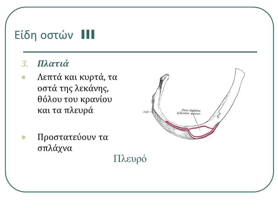 Είδη οστών III Πλευρό Πλατιά