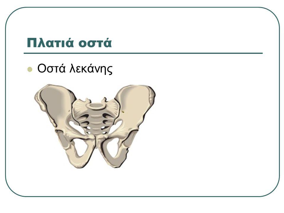 Πλατιά οστά Οστά λεκάνης