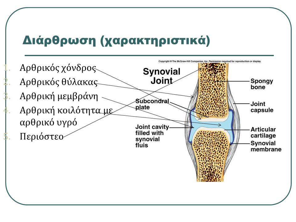 Διάρθρωση (χαρακτηριστικά)