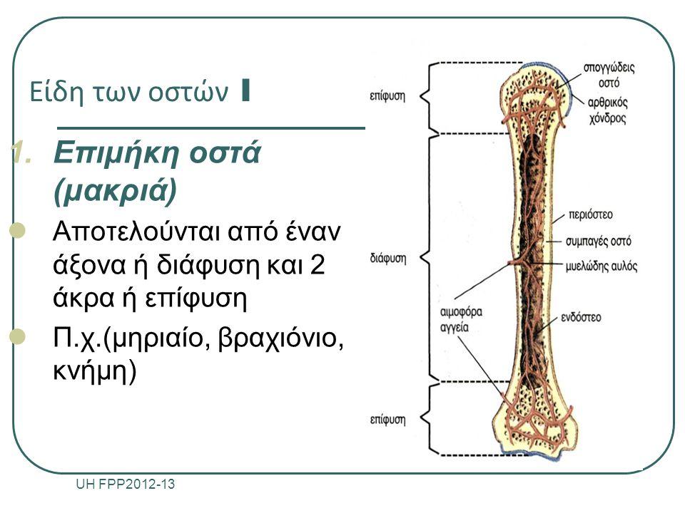 Είδη των οστών I Επιμήκη οστά (μακριά)
