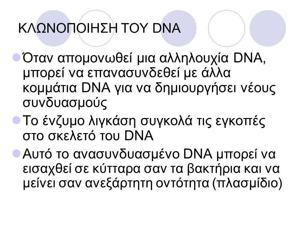 Το ένζυμο λιγκάση συγκολά τις εγκοπές στο σκελετό του DNA