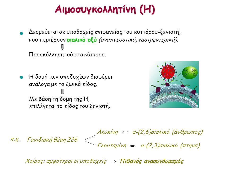 Αιμοσυγκολλητίνη (H)  