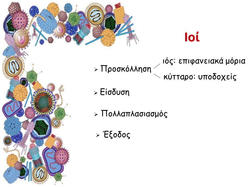 Ιοί ιός: επιφανειακά μόρια κύτταρο: υποδοχείς  Προσκόλληση  Είσδυση