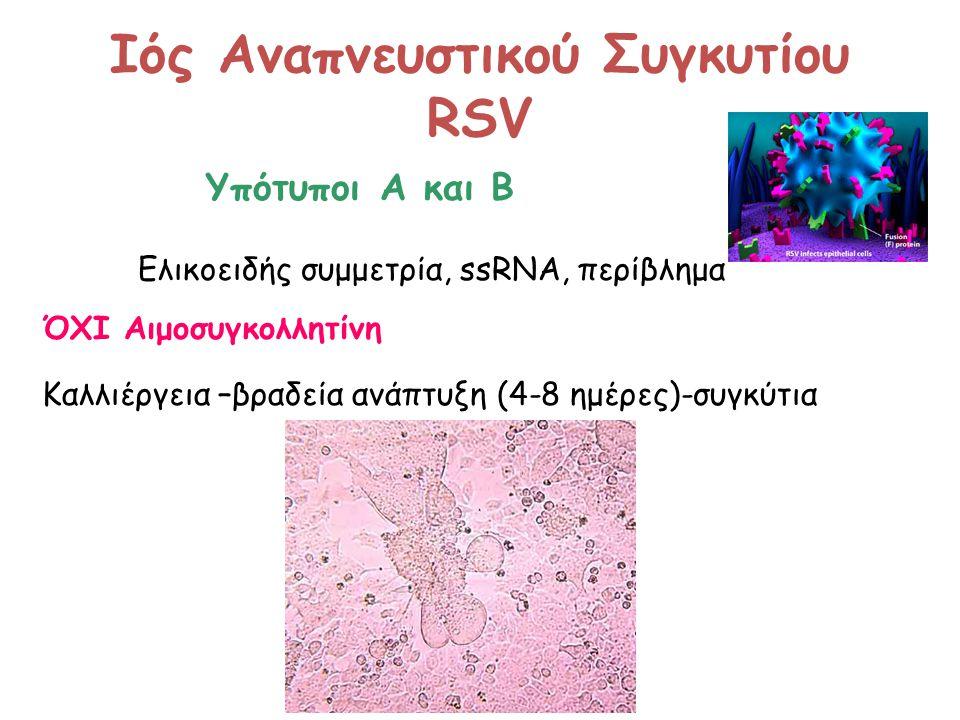Ιός Αναπνευστικού Συγκυτίου RSV