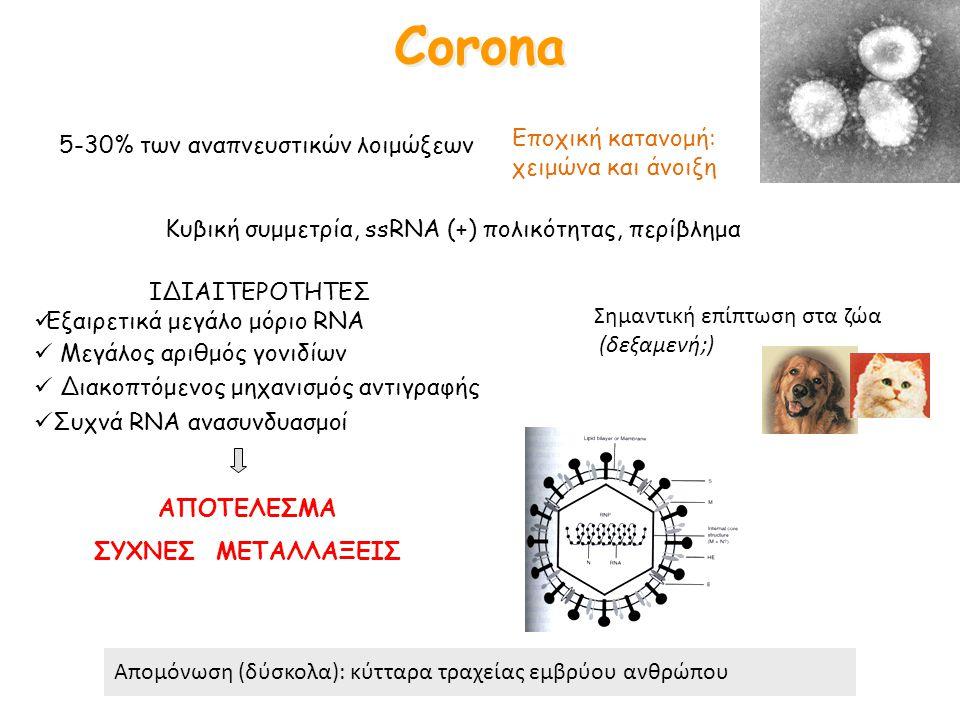 Corona Εποχική κατανομή: χειμώνα και άνοιξη