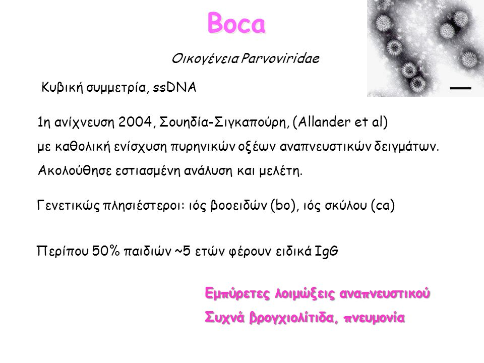 Boca Οικογένεια Parvoviridae Κυβική συμμετρία, ssDNA