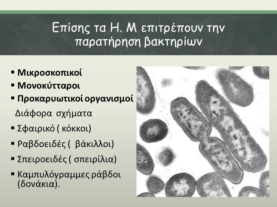 Επίσης τα Η. Μ επιτρέπουν την παρατήρηση βακτηρίων