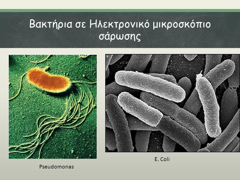 Βακτήρια σε Ηλεκτρονικό μικροσκόπιο σάρωσης