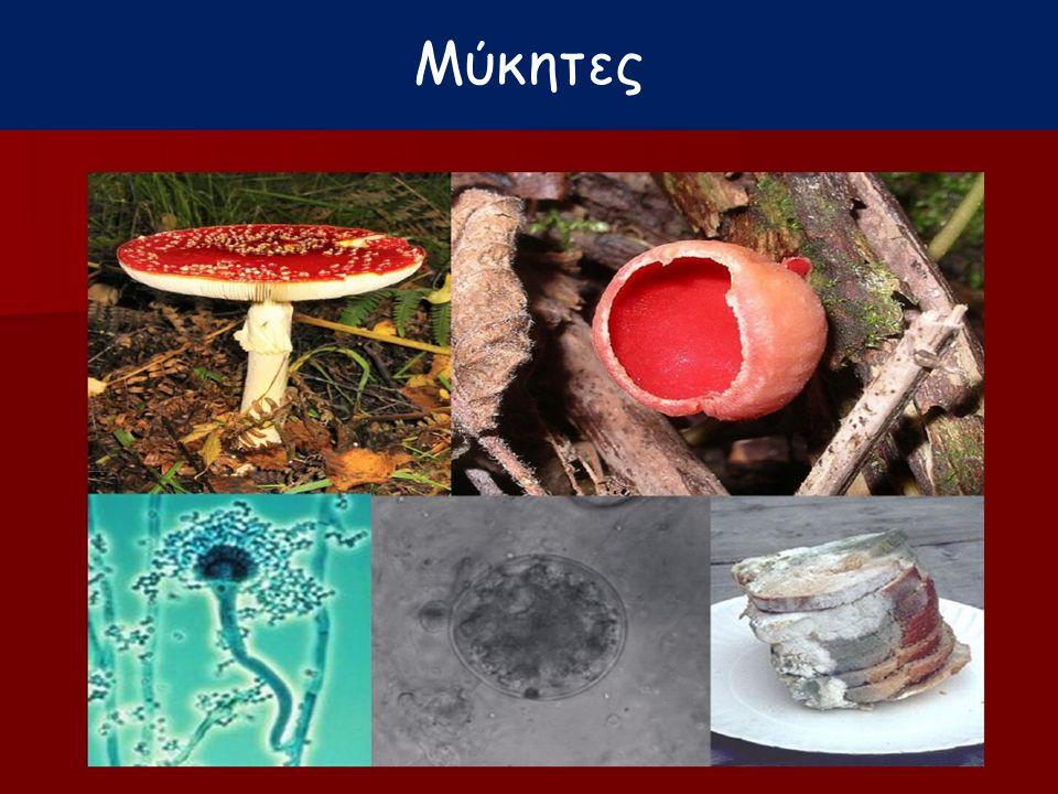 Μύκητες Γεωργάτου Μ.
